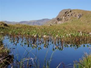 A pond high above Langdale