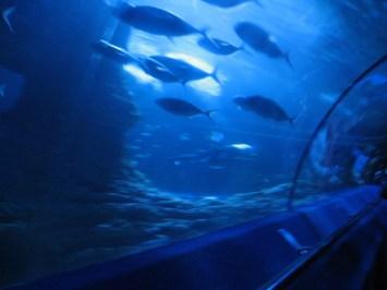 FishainTubeAQWA