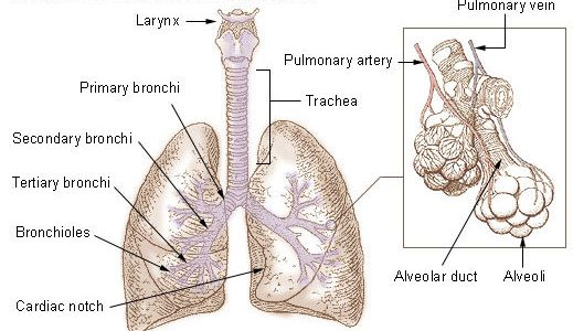 Shortness of breath and cancer