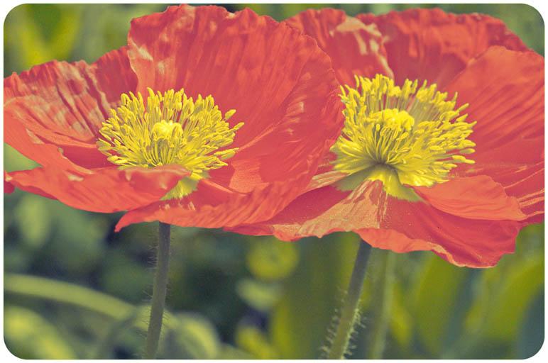Spring, As Told Through Photographs (6/6)