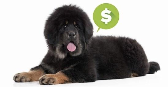 races de chiens chères