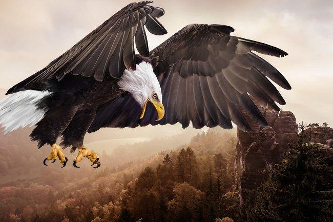 बाज़ से जुड़े 20 रोचक तथ्य – About Eagle in Hindi