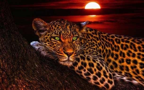 तेंदुए के बारे में 21 रोचक जानकारी – About Leopard in Hindi