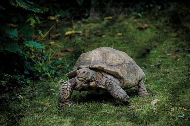 कछुए के बारे में 35 रोचक जानकारी -Facts About Tortoise in Hindi