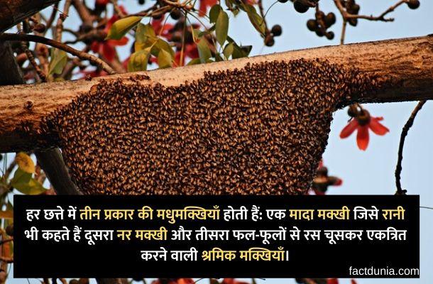 madhumakkhi ka chatta