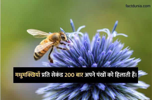 madhumakkhi-facts-honey-bee-in-hindi