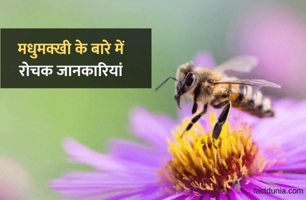 मधुमक्खी के बारे में 30 रोचक जानकारी – About Honey Bee in Hindi