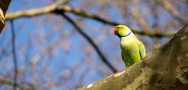 Parrot ki photo - तोते के बारे में जानकारी