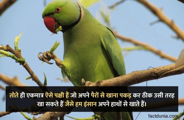 parrot in hindi - Tote ke bare mein