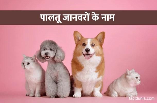10 पालतू जानवरों के नाम हिंदी में   10 Pet Animals Name in Hindi English