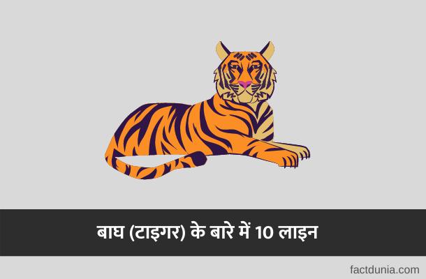 बाघ पर वाक्य [निबंध] | 10 Lines on Tiger in Hindi