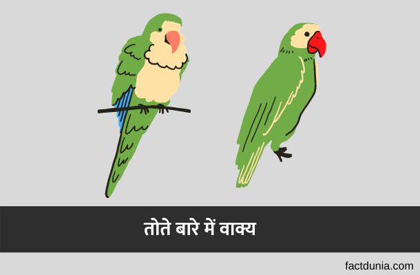 तोते के बारे में 5 लाइन | 10 Lines About Parrot in Hindi