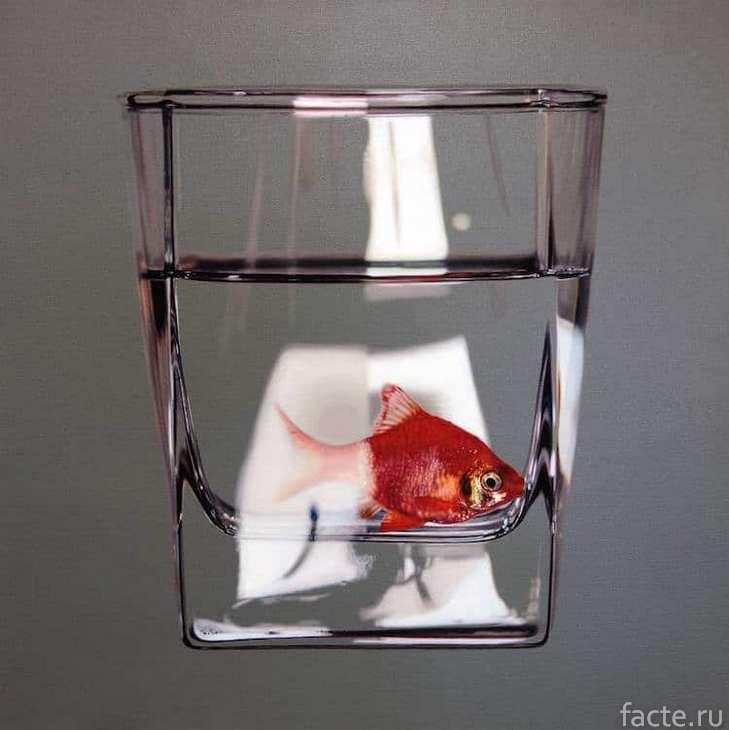 рыба в стакане