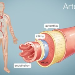 Human Vascular Anatomy Diagram 2 Pole Switch Wiring 8 Facts About Arteries | Fact File