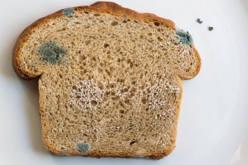 Image result for bread mold