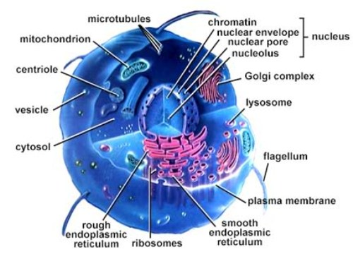 10 Facts about Cell Structure and Function  Fact File