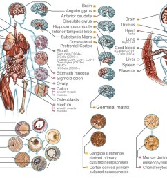 detailed diagram of human organs of both a adult and a fetus [ 1600 x 890 Pixel ]