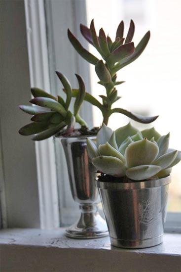 Silver Cup Garden pot