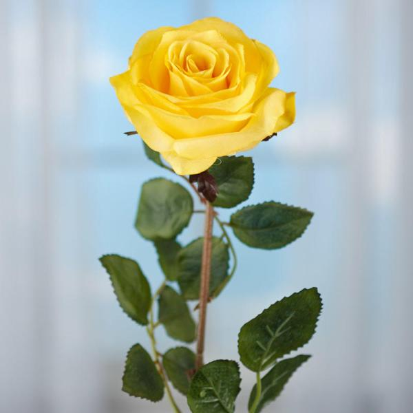 Yellow Rose and Stem