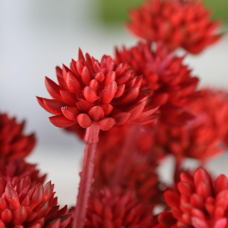 Red Artificial Sedum Succulent Sprays  Picks and Stems  Floral Supplies  Craft Supplies