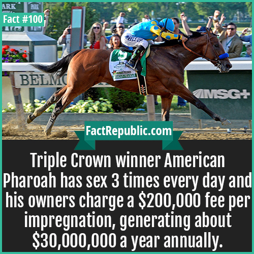 100. American Pharoah-Triple Crown winner American Pharoah has sex 3 times every day and his owners charge a $200,000 fee per impregnation, generating about $30,000,000 a year annually.