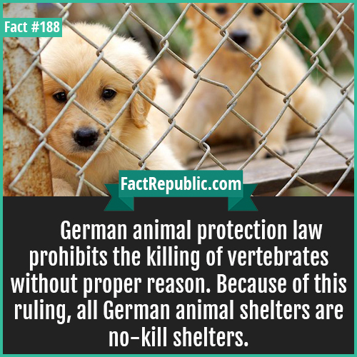 188-german animal law-German animal protection law prohibits the killing of vertebrates without proper reason. Because of this ruling, all German animal shelters are no-kill shelters.
