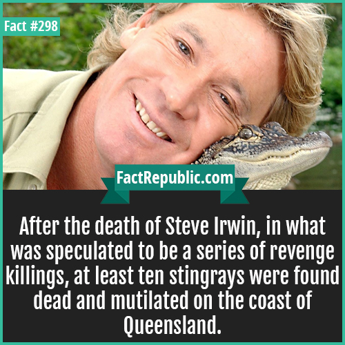 298-Steve irwin-After the death of Steve Irwin, in what was speculated to be a series of revenge killings, at least ten stingrays were found dead and mutilated on the coast of Queensland.