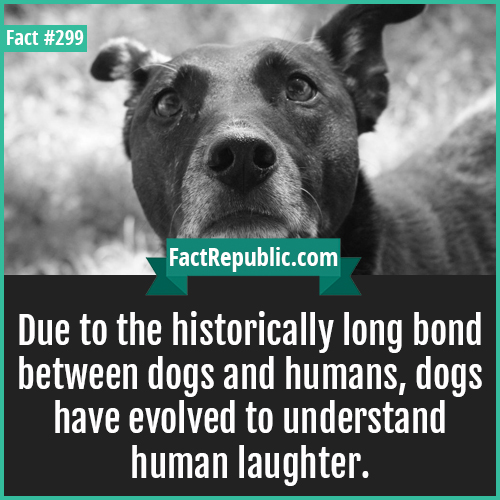 299-Dog-Due to the historically long bond between dogs and humans, dogs have evolved to understand human laughter.