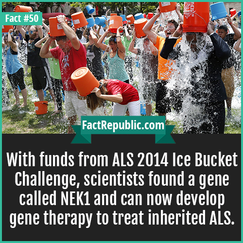 50-ice-bucket-challenge-With funds from ALS 2014 Ice Bucket Challenge, scientists found a gene called NEK1 and can now develop gene therapy to treat inherited ALS.