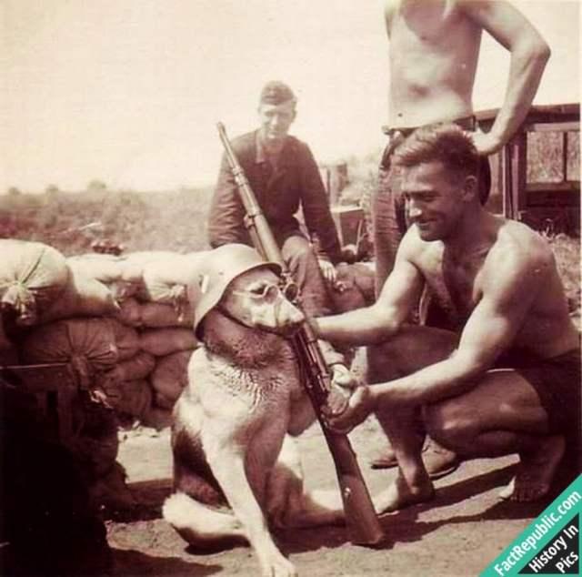 52-dog-soldier