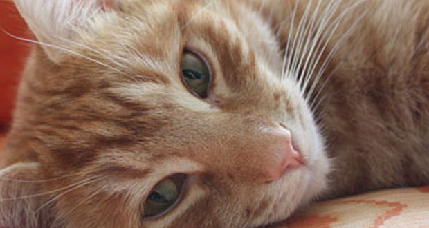 Orlando cat