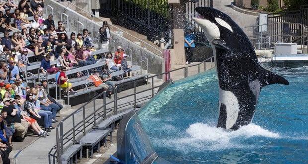 Shamu whale