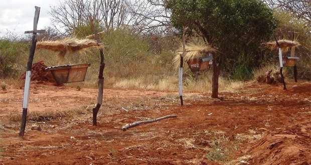 Beehive fences