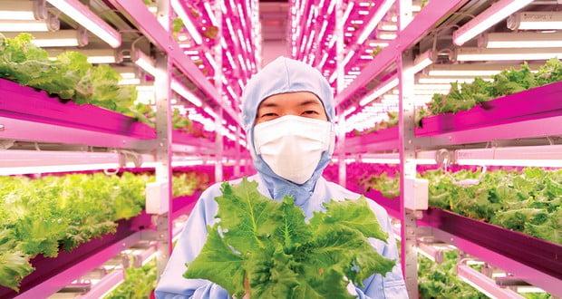 Japan indoor vegetable factory