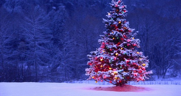 Christmas tree growth