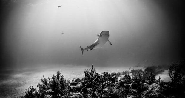Shark vomits a human arm