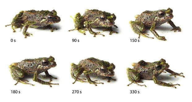Punk rocker frog
