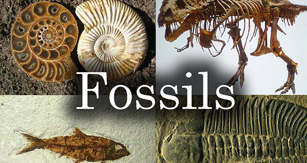 Fossil word