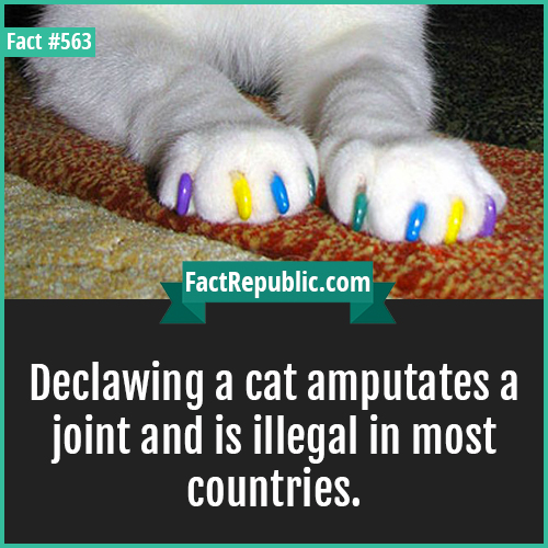 563-Declawing-Declawing a cat amputates a joint and is illegal in most countries.