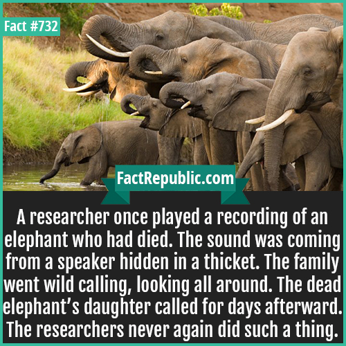 732. Elephant-A researcher once played a recording of an elephant who had died. The sound was coming from a speaker hidden in a thicket. The family went wild calling, looking all around. The dead elephant's daughter called for days afterward. The researchers never again did such a thing.