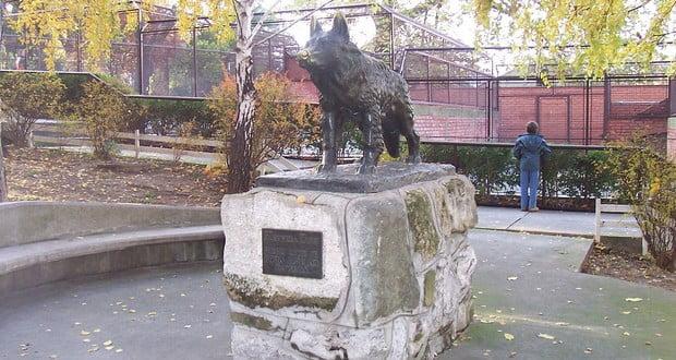 Gabi dog