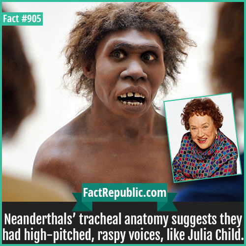 905. Neanderthal Voice Julia Childs-Neanderthals' tracheal anatomy suggests they had high-pitched, raspy voices, like Julia Child.