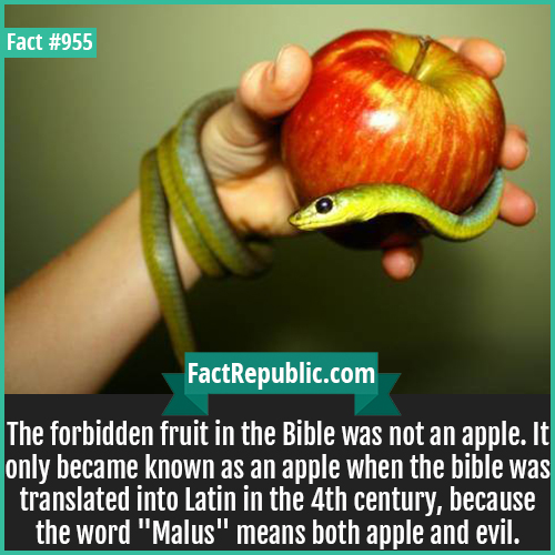 955. Forbidden Fruit-The forbidden fruit in the Bible was not an apple. It only became known as an apple when the bible was translated into Latin in the 4th century, because the word