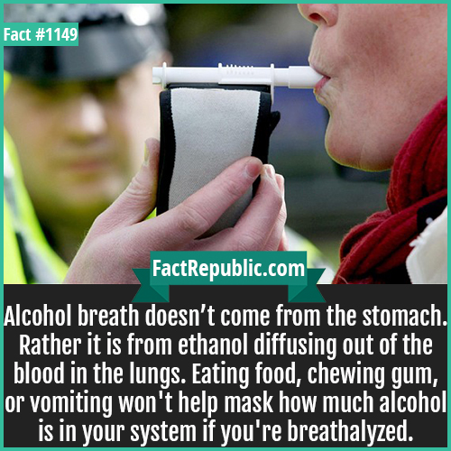 1149. Breathalyzer-Alcohol breath doesn't come from the stomach. Rather it is from ethanol diffusing out of the blood in the lungs. Eating food, chewing gum, or vomiting won't help mask how much alcohol is in your system if you're breathalyzed.