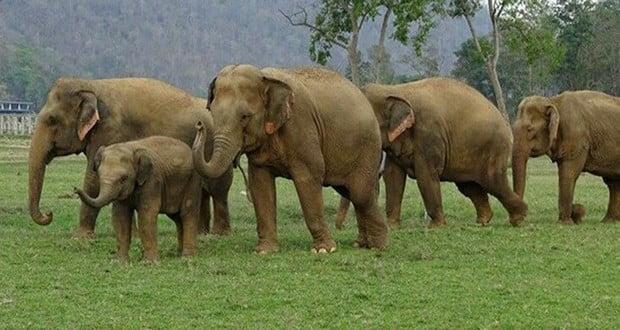 Elephant's ability