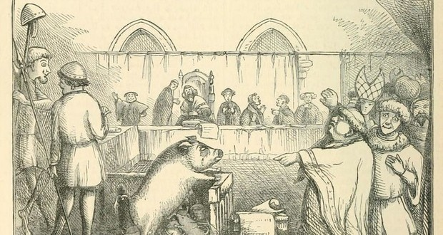 Animal trial