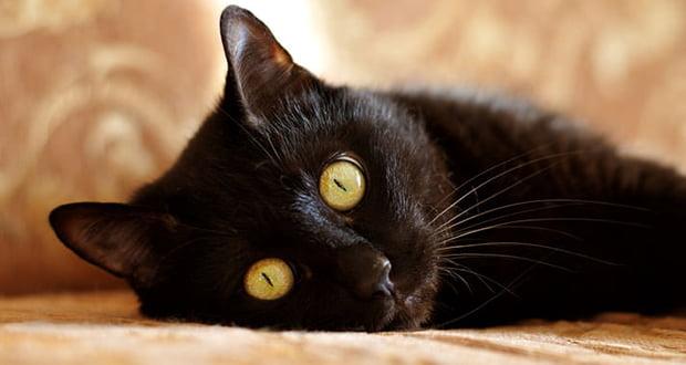 Cat Sith