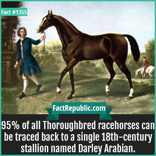 1355. Darley Arabian-95% of all Thoroughbred racehorses can be traced back to a single 18th-century stallion named Darley Arabian.