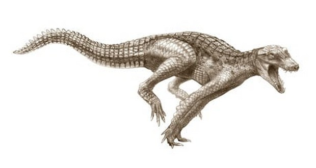 Ancient crocodile