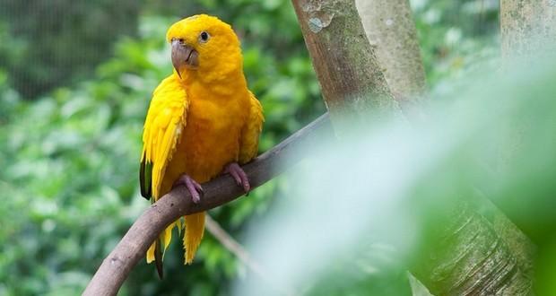 Parrot's blood